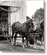 Draft Horses At Work Metal Print by Olivier Le Queinec