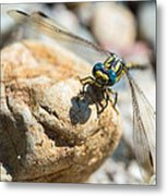 Dragonfly Metal Print by Marco Oliveira