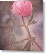 Dream-struck Metal Print by Priska Wettstein