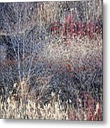 Dry Grasses And Bare Trees Metal Print by Elena Elisseeva
