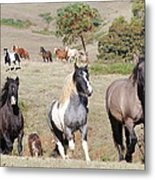 Duchess Sanctuary On The Move Metal Print by Duchess Sanctuary