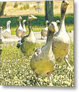 Duck Duck Goose Metal Print by Artist and Photographer Laura Wrede