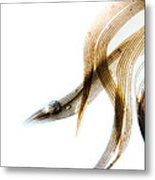 Duck Feather And Water Drops Metal Print by Bob Orsillo
