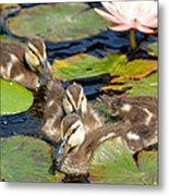 Duck Soup 2 Metal Print by Fraida Gutovich