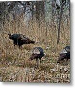 Eastern Wild Turkeys Metal Print by Linda Freshwaters Arndt