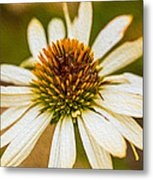 Echinacea Fading Beauty Metal Print by Omaste Witkowski