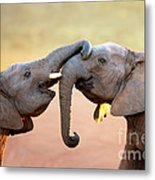 Elephants Touching Each Other Metal Print by Johan Swanepoel