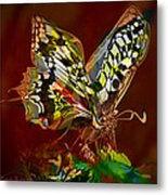 Enchanted Butterfly. First.  Metal Print by Tautvydas Davainis