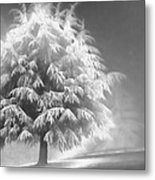 Enlightened Tree Metal Print by Don Schwartz