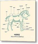 Equus Ferus Caballus Metal Print by Igor Kislev