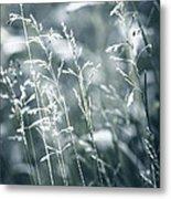 Evening Grass Flowering Metal Print by Elena Elisseeva