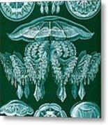 Examples Of Discomedusae Metal Print by Ernst Haeckel