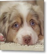 Exhausting Being A Puppy Metal Print by Kay Pickens