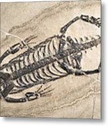 Extinct Reptile Skeleton Metal Print by Science Photo Library