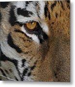 Eye Of The Tiger Metal Print by Ernie Echols