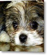 Eyes On You Metal Print by Karen Wiles