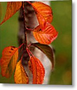 Fall Beauty Metal Print by Sharon Elliott
