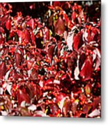 Fall Foliage Colors 08 Metal Print by Metro DC Photography