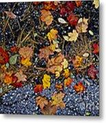Fall Leaves On Pavement Metal Print by Elena Elisseeva