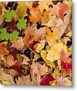 Fall Maples Metal Print by Steven Ralser
