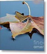 Fall Reflections Metal Print by Jane Ford