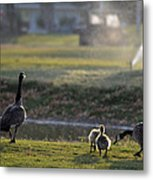 Family Affair Metal Print by Camille Lopez