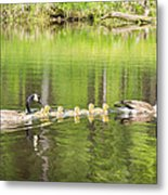 Family Outing Metal Print by Bill Pevlor