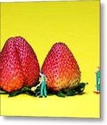 Farmers Working Around Strawberries Metal Print by Paul Ge