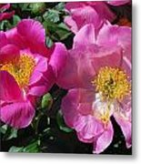 Festival Of Pink Metal Print by Billie Colson