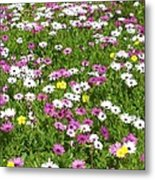 Field Of Flowers Metal Print by Deborah  Montana