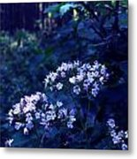 Fifty Shades Of Purple Metal Print by Lucy D
