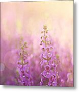 First Light Metal Print by Amy Tyler