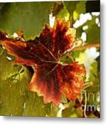 First Signs Of Autumn Metal Print by Dry Leaf