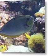 Fish - National Aquarium In Baltimore Md - 1212121 Metal Print by DC Photographer