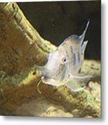 Fish - National Aquarium In Baltimore Md - 121248 Metal Print by DC Photographer