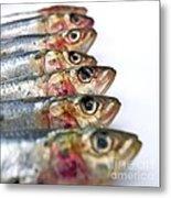 Fishes Metal Print by Bernard Jaubert