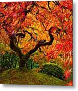 Flaming Maple Metal Print by Darren  White