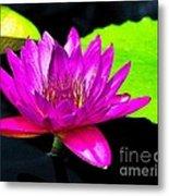 Floating Purple Water Lily Metal Print by Nick Zelinsky