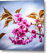 Floating To Earth Metal Print by Bob Orsillo