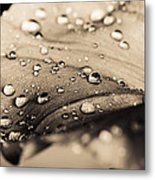 Floral Close-up IIi Metal Print by Marco Oliveira