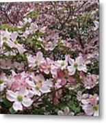 Flourishing Pink Magnolias Metal Print by Deborah  Montana