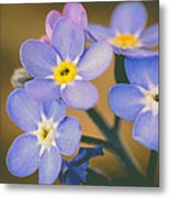 Forget Me Nots Metal Print by Marco Oliveira