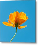 Flower - Growing Up In Brooklyn Metal Print by Mike Savad