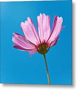 Flower - Growing Up In Philadelphia Metal Print by Mike Savad