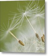 Fly Away Metal Print by Anne Gilbert