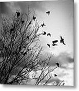 Flying Birds Metal Print by Elena Elisseeva