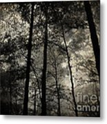 Fog In The Forest Metal Print by Lorraine Heath