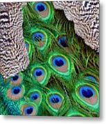 Folded Wings Metal Print by Angelina Vick