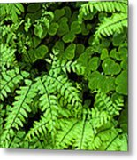 Foliage At Springtime Metal Print by Andrew Soundarajan