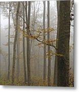 Forest In Autumn Metal Print by Matthias Hauser